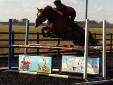 All Rounder horse - 5 yrs 2 mths 15.3 hh Liver Chestnut - Lincoln...