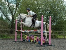 All Rounder horse - 5 yrs 5 mths 15.2 hh Blue & White - Leicester...