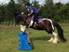 15hh Gypsy Cob Mare €� Excellent Show Or Dressage Prospect