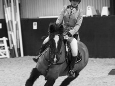 All Rounder horse - 13 yrs 11 mths 14.2 hh Black - Suffolk
