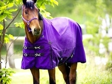 Equi-Theme Tyrex Turnout Rug (5'9