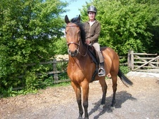Show Jumpers horse - 4 yrs 6 mths 15.3 hh Bright Bay - South York...