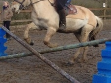 All Rounder horse - 6 yrs 2 mths 14.0 hh Golden Dun - West Midlands