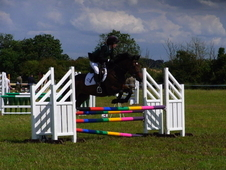 15hh. Registered Connemara, 7yro, Bay Mare, Molly.