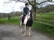 Coloured horse - 12 yrs 11 mths 14.2 hh Skewbald - Derbyshire