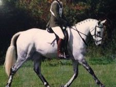 Talented Allrounder For Sale