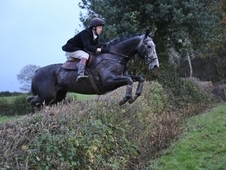 Freelance Riding Instructor and Rider available