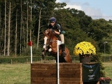 Eventers horse - 13 yrs 15.2 hh Chestnut - Gloucestershire