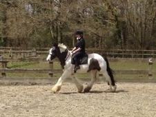 Family horse - 5 yrs 15.0 hh Piebald - West Sussex