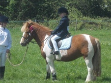 All Rounder horse - 9 yrs 12.1 hh Skewbald - Essex