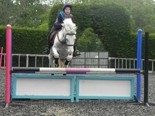 All Rounder horse - 6 yrs 4 mths 14.1 hh Blue & White - West Sussex
