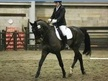 All Rounder horse - 6 yrs 7 mths 18.0 hh Bay - North Yorkshire