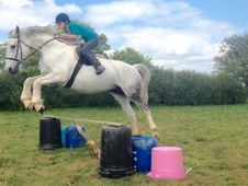 ** STUNNING SAFE 16HH TALENTED MARE ***