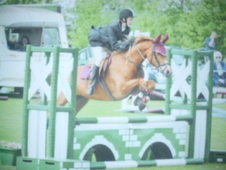 13. 2 hands, Chestnut Mare, 15 years old