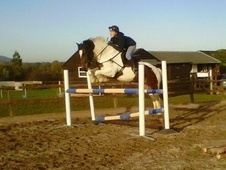 Show Jumpers horse - 8 yrs 15.1 hh Skewbald - Gloucestershire