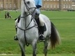 All Rounder horse - 13 yrs 16.1 hh Dapple Grey - Cambridgeshire