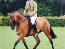 Eventers horse - 7 yrs 15.3 hh Bright Bay - North Yorkshire