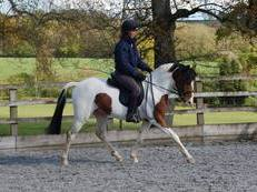 Top Potential Competition Pony 14.2hh