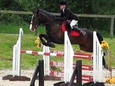 All Rounder horse - 7 yrs 16.1 hh Bay - Kent