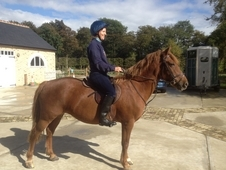 Experienced PC/Riding Club Pony 13. 2