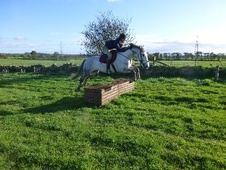 All Rounder horse - 10 yrs 3 mths 16.0 hh Dapple Grey - Northumbe...