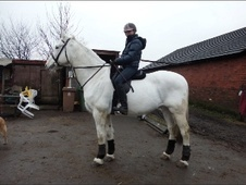 All Rounder horse - 12 yrs 16.2 hh Grey - Lancashire