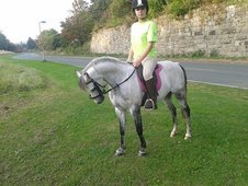 12. 2hh British Riding Pony Make Ideal Pc Or Mounted Games Pony