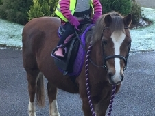 Beautiful hard to find family pony 12. 2h sec B