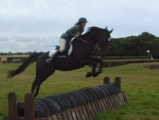 All Rounder horse - 17 yrs 15.2 hh Dark Bay - Essex