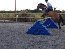 *amazing Pony For Sale*