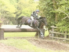 All Rounder horse - 8 yrs 15.0 hh Black - West Yorkshire