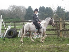 Pony Club Ponies horse - 8 yrs 13.0 hh Skewbald - Buckinghamshire