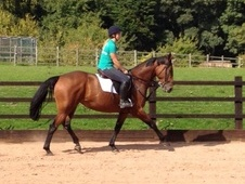 Potential Eventer For Sale