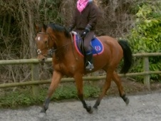 All Rounder horse - 11 yrs 16.0 hh Bright Bay - Surrey