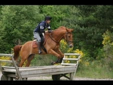 Tbx Gelding 11 Years Old Eventer For Sad Sale