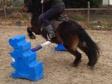 fab jumping pony for sale