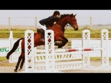 All Rounder horse - 6 yrs 9 mths 15.0 hh Bay - Cornwall