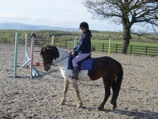 All Rounder horse - 7 yrs 5 mths 14.0 hh Skewbald - Fife