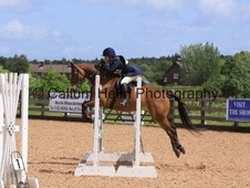 All Rounder horse - 8 yrs 5 mths 14.2 hh Bright Bay - Nottinghams...