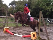 Pony Club Ponies horse - 5 yrs 13.2 hh Chestnut - Somerset