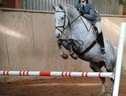 All Rounder horse - 13 yrs 1 mth 16.1 hh Dapple Grey - West Sussex