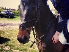 All Rounder horse - 13 yrs 14.1 hh Bay - Warwickshire
