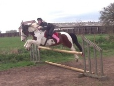 All Rounder horse - 10 yrs 16.0 hh Bay - Leicestershire