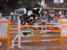 Top Class 148cm Pony For Sale