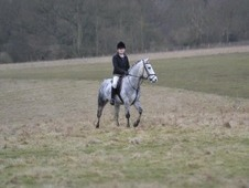 12. 3 allrounder/pony club pony. 9 years old, new forest, gelding