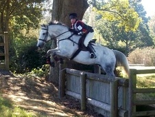 All Rounder horse - 11 yrs 1 mth 16.1 hh Grey - East Sussex