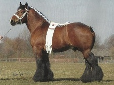 Family horse - 10 yrs 16.2 hh Bay Roan - West Yorkshire
