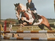Quality showjumping pony for sale