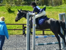 Stunning potential Show jumper/Eventer