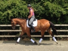Super easy dressage mare